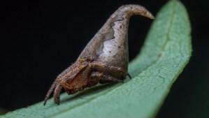 Nombran nueva especie de araña en honor a Harry Potter
