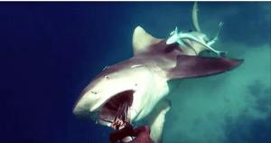 Un buzo muestra en VIDEO cómo sobrevivió al inesperado ataque de un tiburón