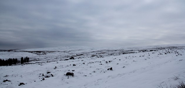 Langsett and Midhope
