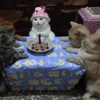 Ich mach heute nichts, dafür bekommt ihr Katzen, die Geburtstage hassen!