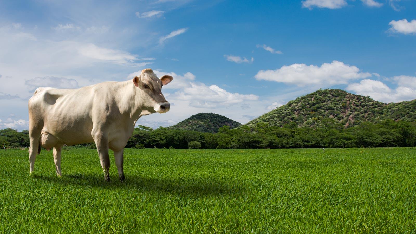 home-vaca