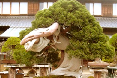 el-arte-bonsai
