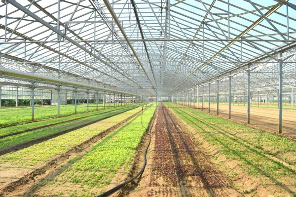 The Barducas grow their produce in 2 acres of greenhouses and on 50 acres of land.