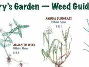 259_weed_guide_example