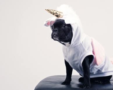 adorable-animal-canine-1564506 (1)