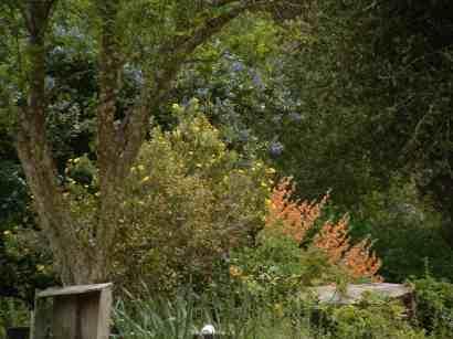 How To Design your garden Using Native Plants - designing your garden
