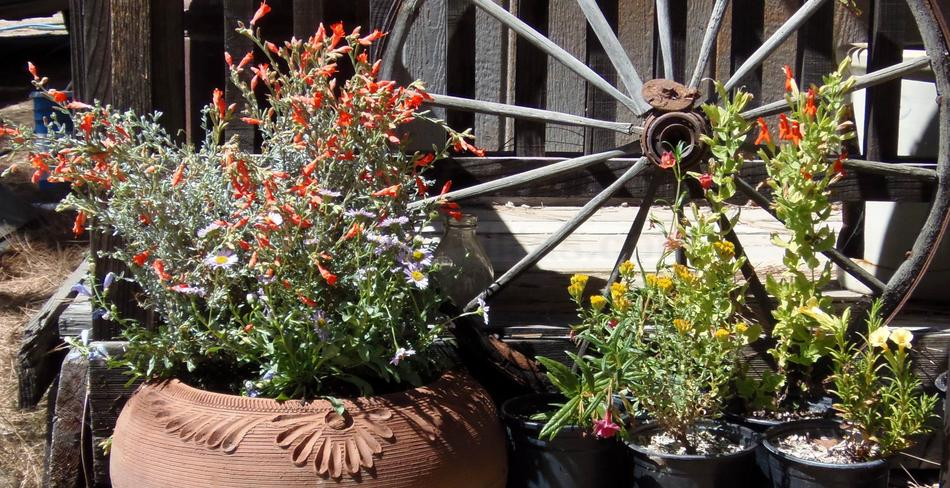 Native Plants In Container Gardening Pot Plants For Deck