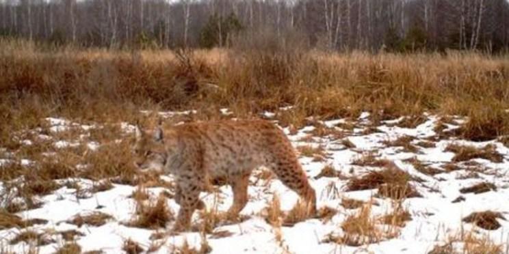 Les 4 mythes auxquels l'industrie nucléaire veut faire croire Lynx.jpg?zoom=1
