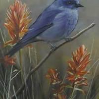 Updated Image - Mountain Bluebird