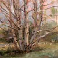 Birch Trees -- Plein Air Painting
