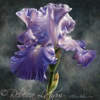 Iris Painting In Miniature - New Watercolor