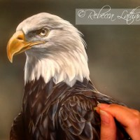 American Bald Eagle Watercolor - Work-in-progress
