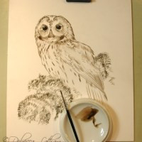 Tawny Owl – New Painting in Sepia stage