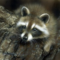 Raccoon Painting Framed