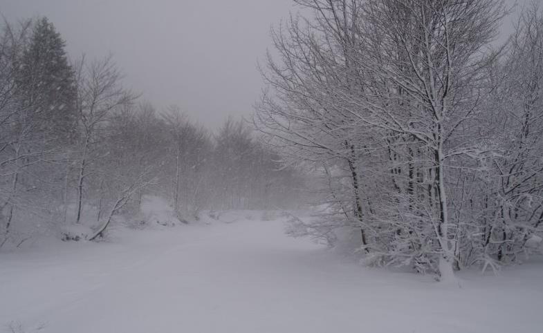 bufera-neve-bosco