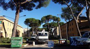 latina-viale-italia-alberi-tagliati-1