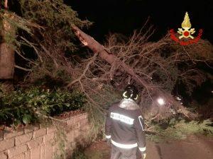albero-caduto-vigili-fuoco-latina