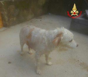 cane-salvato-latina