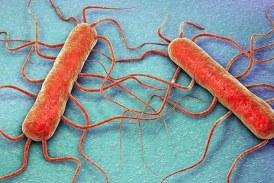 Pericolo Listeria, Findus ritira alcuni prodotti surgelati