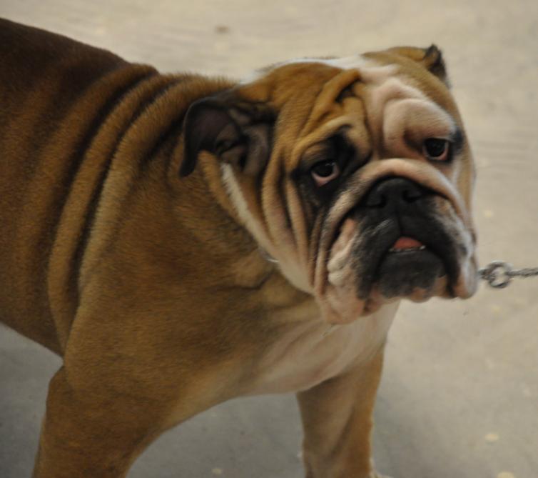 concorso-bellezza-cani-latina-18