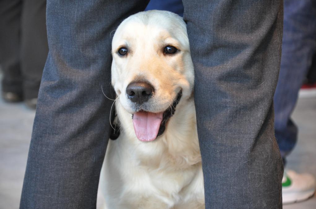 concorso-bellezza-cani-latina-22