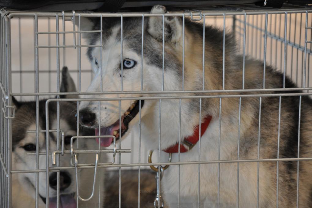 concorso-bellezza-cani-latina-23