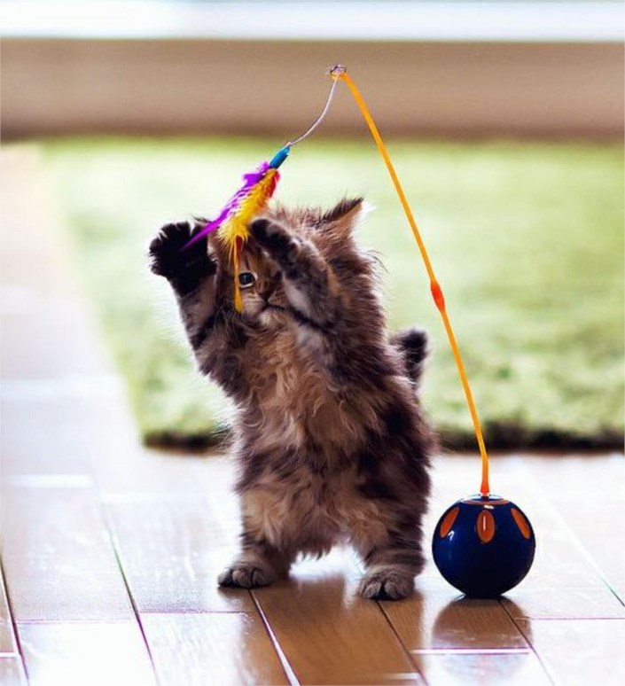 Husband Wife Funny Quotes Wallpaper Cat Playing With Her First Feather Toy