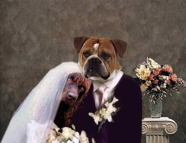 Wallpapers For Girls Spark Funny New Married Dogs Couple