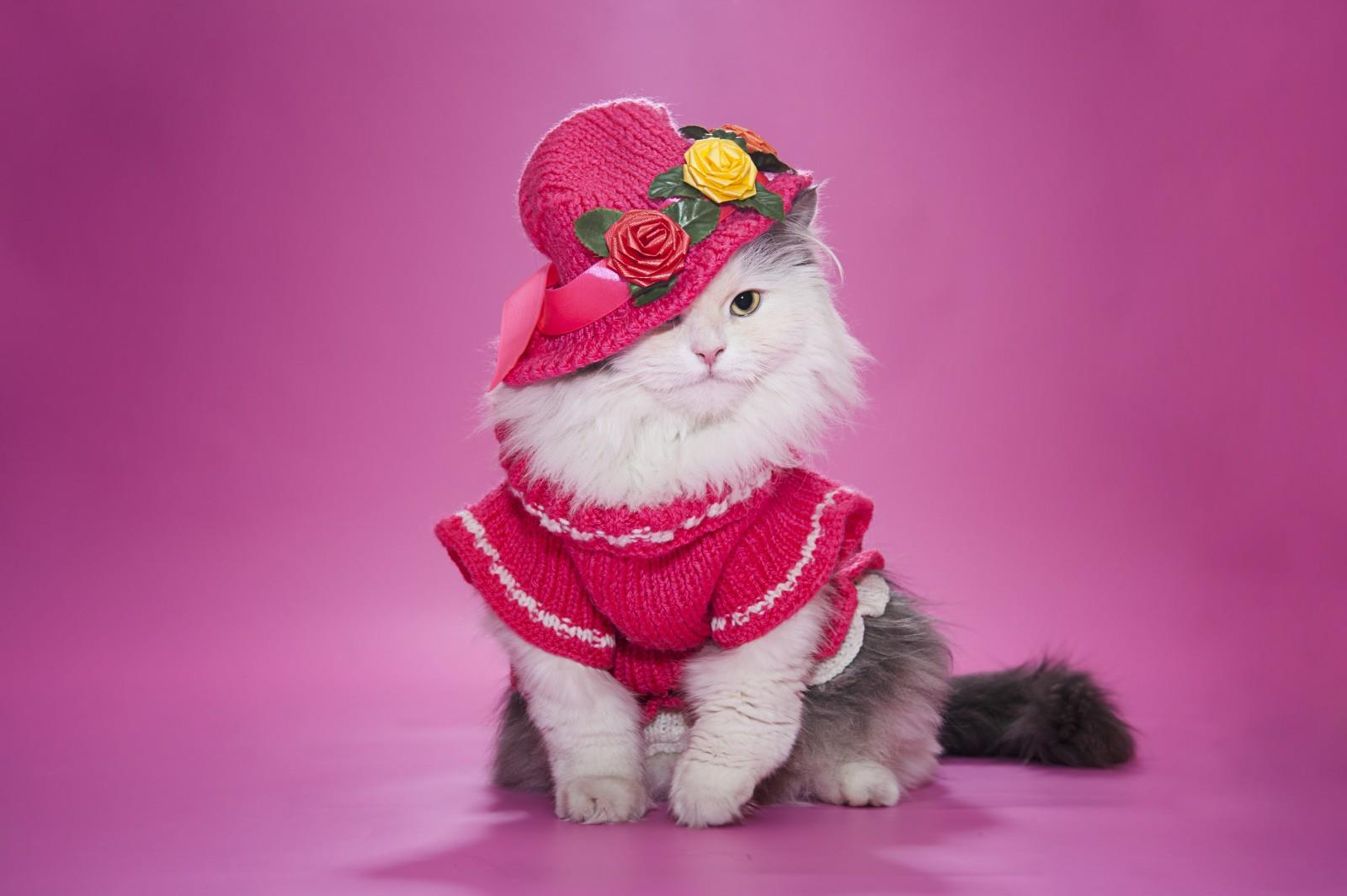 Sweet Baby Girl Wallpaper For Facebook Cute Cat Image In Pink Dress And Hat