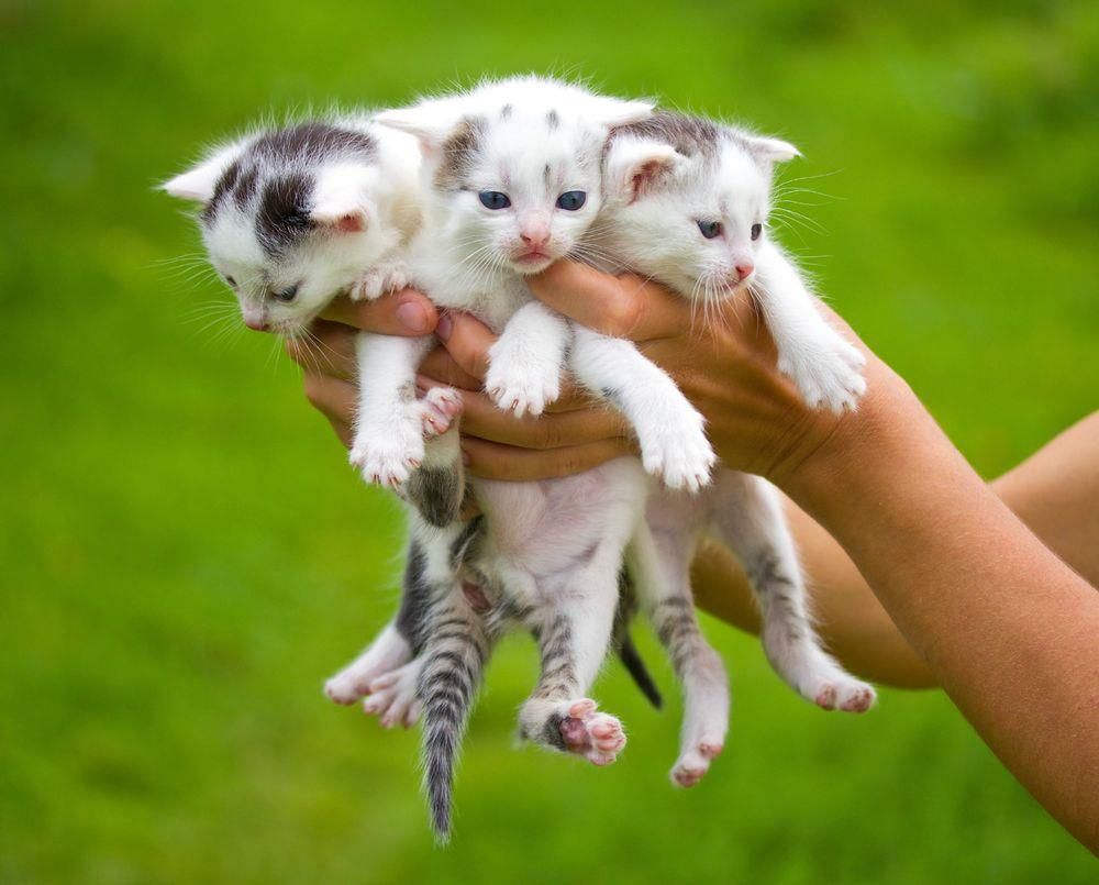 Hindi Movie Wallpapers With Quotes Three Little Cute Cats Kittens