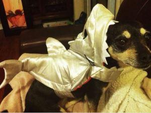 Abby isn't what you'd call an avid Halloween fan...