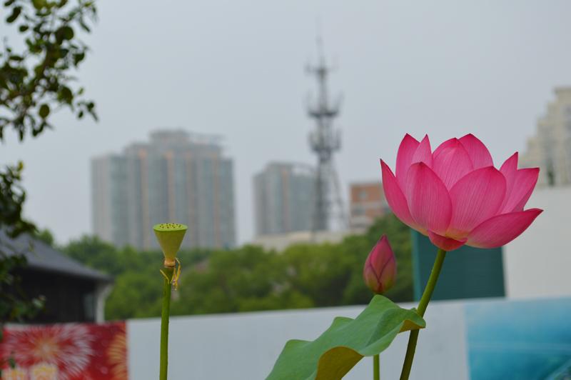 China Photo Diary   Beijing Nanjing Shanghai photo series what is china like feeling living in china moving to china american in china american girl in china expat travel wanderlust