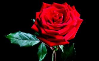 rosa   lavocedelcarro.it