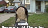 A funny meme of a cat inside a malbox. Mailman jumped 15 feet. Dog was right. This is fun.