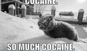 A picture of a cat freezing in snow. Cocaine. So much cocaine.