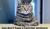 A funny cat meme. I don't know how to say this but. You don't have a hamster anymore.