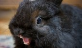 A rabbit bunny overly excited for carrots. Ermahgerd kerrerts.