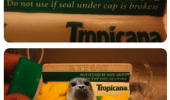 do-not-use-if-seal-under-cap-is-broken-tropicana-lemonade-funny-meme
