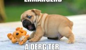 ermahgerd-a-derg-ter-dog-puppy-animals-meme