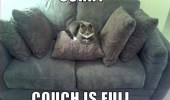 sorry-couch-is-full-cat-meme