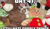 grumpy-cat-meme-day-47-hate-duddly-things