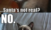 "A grumpy cat meme. A kitten saying ""... Santa's not real?"" No."