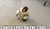 An Ikea monkey meme. A dapper monkey wearing a fur coat in an Ikea store. No one cared who I was, until I put on the coat.