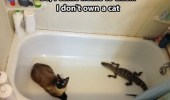 A cat and an alligator in a person's bathtub.