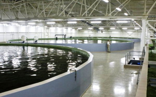 Intensive Recirculating Aquaculture Systems Ras Land