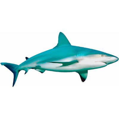 shark   meaning of shark in Longman Dictionary of Contemporary English   LDOCE