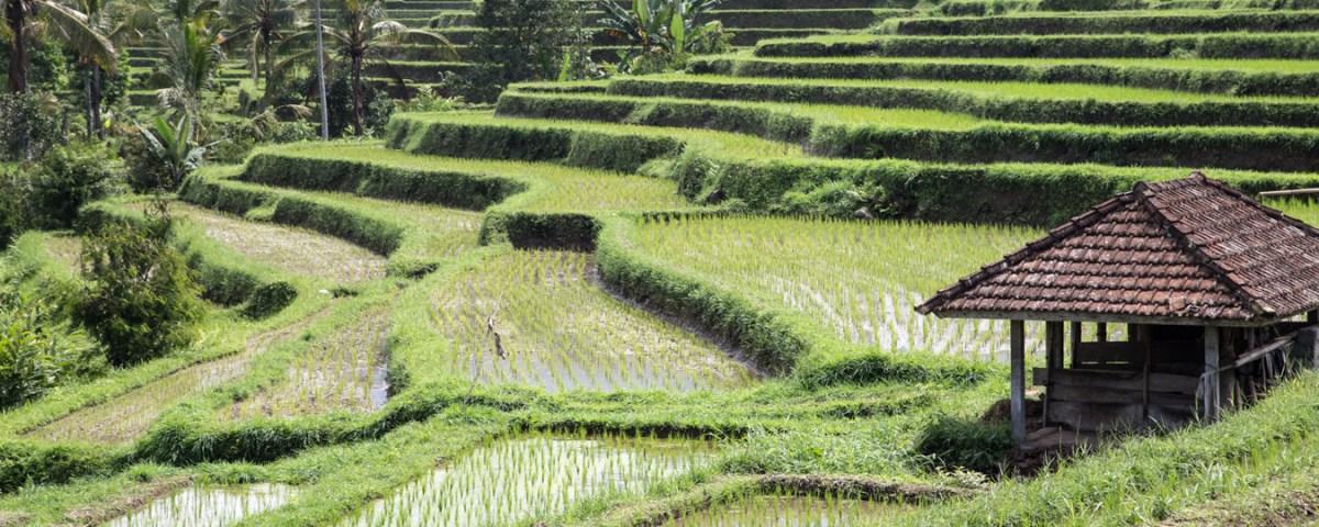 Rizières de Jatiluwih - Bali - Indonésie
