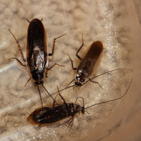 Charleston Pest Control Extermination Ledford S Pest