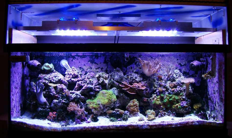 DIY LED Reef Tank Light