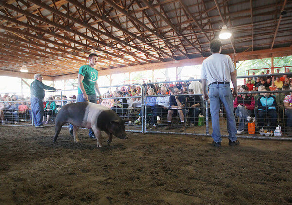 Give To Lcn Via The 4 H Livestock Auction Leelanau